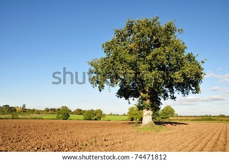 Countryside View of Furrowed Farmland with a Lone Oak Tree and Blue Sky in the Distance - stock photo