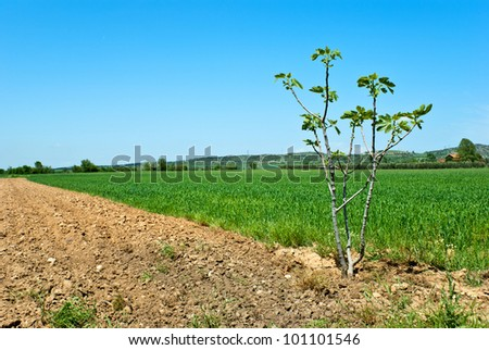 Countryside View of Furrowed Farmland with small fig - stock photo