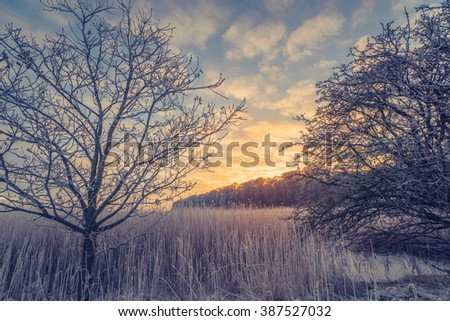 Countryside winter landscape with trees in the sunrise - stock photo