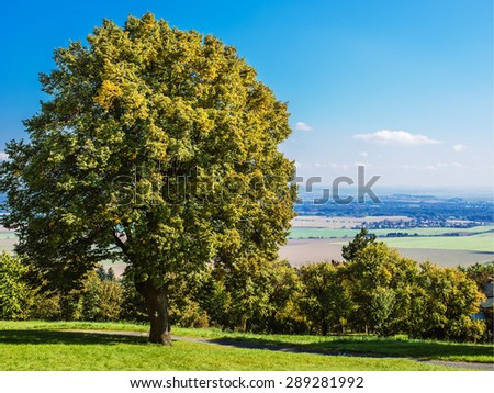 Countryside with tree standing alone in Eastern Europe. - stock photo