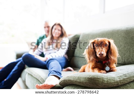 couple and cute dog in a sofa - stock photo