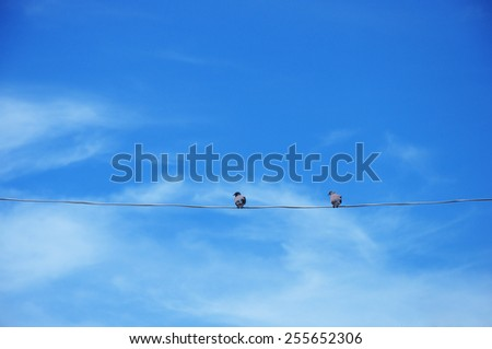 Couple birds on the rope with beautiful blue sky - stock photo