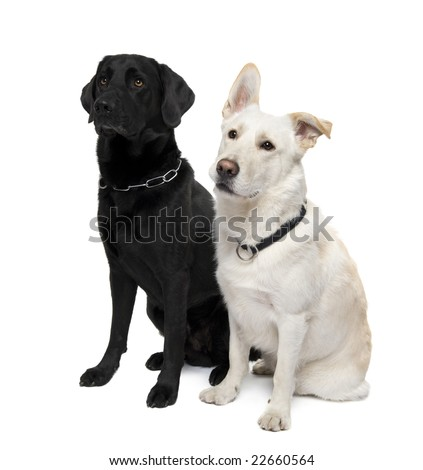 couple of Bastard in front of a white background