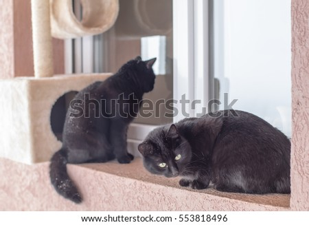 Couple of black cats sitting in front of a window waiting to get inside in cold winter day.