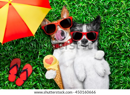 couple of dogs in love very close together lying on grass under the umbrella at the park eating ice cream and hugging or embracing
