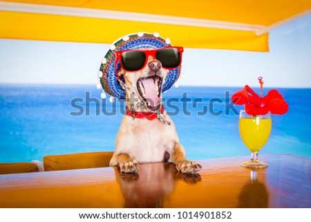 Drunk Dog Stock Images, Royalty-Free Images & Vectors | Shutterstock