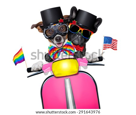 couple of just married gay  same sex dogs driving a motorbike  just after the wedding, isolated on white background, on a gay pride parade - stock photo