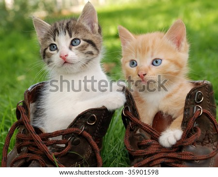 couple of little kittens sitting in boots - stock photo