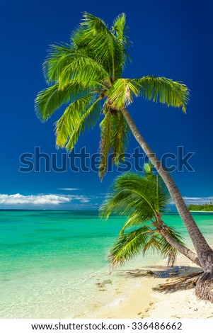 Couple of palm trees against vibrant blue sky, Fiji Islands - stock photo