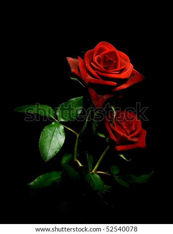 Couple of red roses isolated on black background - stock photo