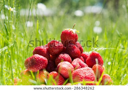 Couple of Strawberries on green grass