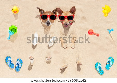 couple of two dogs  buried in the sand at the beach on summer vacation holidays , having fun and enjoying ,wearing red sunglasses - stock photo