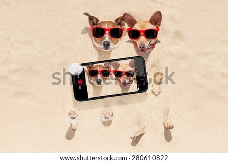 couple of two dogs buried in the sand at the beach on summer vacation holidays , having fun taking a selfie with smartphone - stock photo