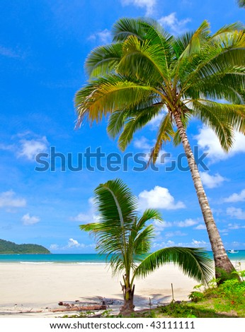 Couple palm trees on white sand beach, blue sky, white clouds and sea