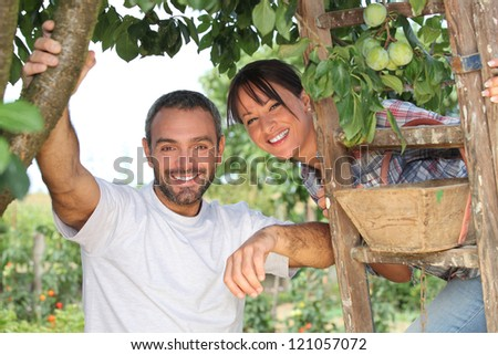 Couple picking fruit - stock photo