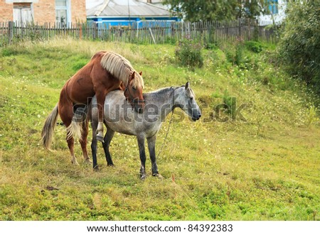 Animals mating stock photos images amp pictures shutterstock