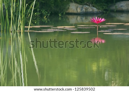 Courtyard landscape of modern residential building-Courtyard pond and water lilies - stock photo