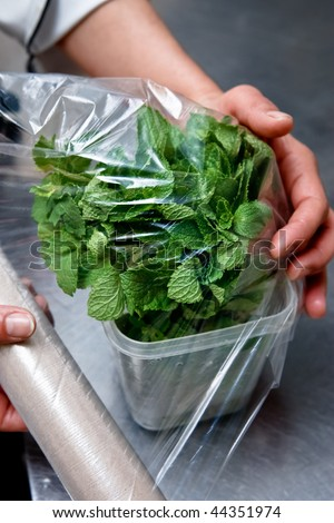 Covering the mint plant - stock photo