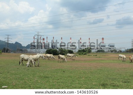 cow and power station - stock photo