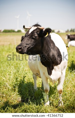 cow beauty knows how to pose - stock photo