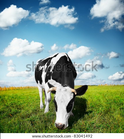 Cow eating green grass on a meadow - stock photo