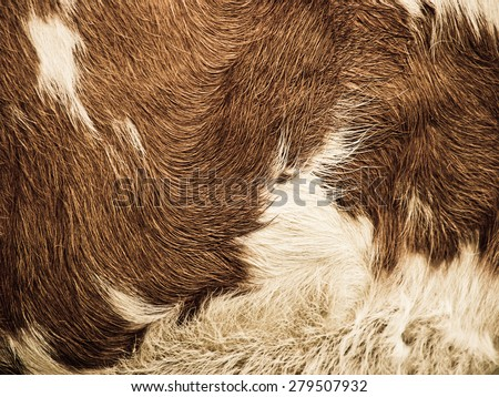 cow fur background - stock photo