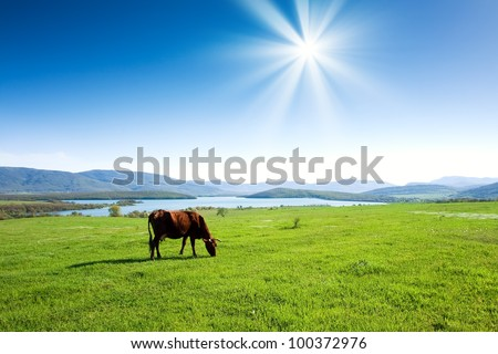 Cow grazing on a green pasture near mountains - stock photo