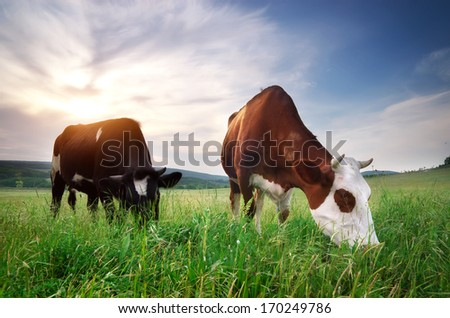 Cow in meadow. Rural composition. - stock photo