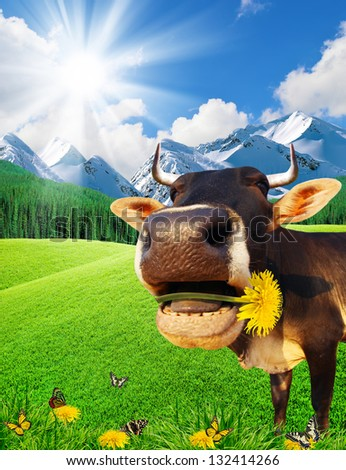 Cow in mountains on a green glade. - stock photo