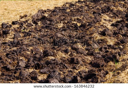 Cow manure in the garden - stock photo