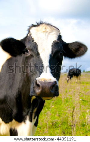 Cow near the wall of stones with grass and sky background - stock photo