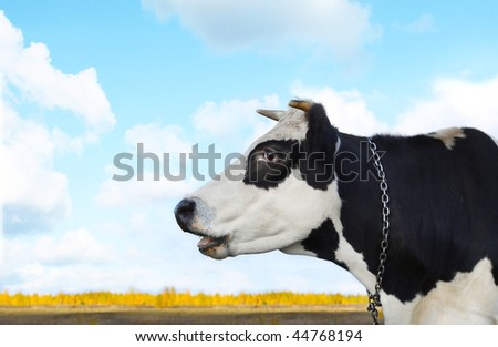 Cow on blue sky with clouds - stock photo
