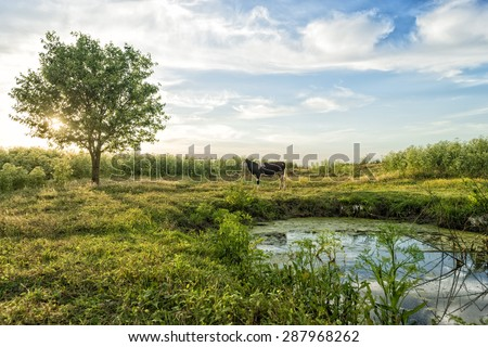 Cow on green grass and evening sky - stock photo