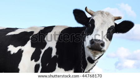 Cow over blue sky with clouds - stock photo