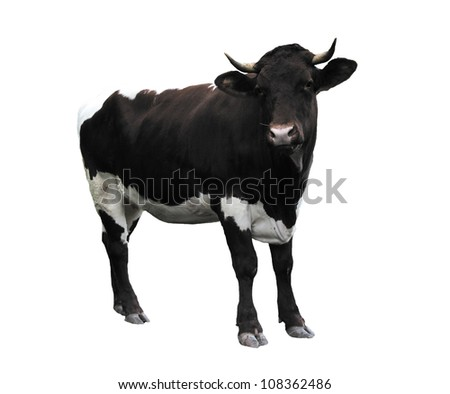 Cow over white - stock photo