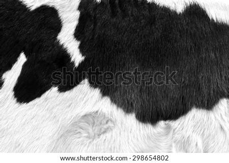 cow skin texture - closeup fur fashion grey background black and white - stock photo