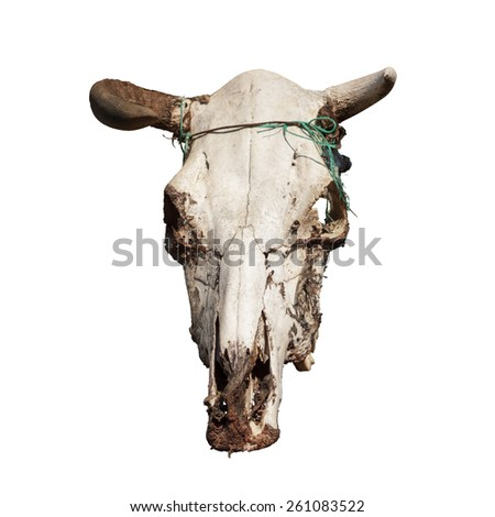 Cow skull with horns on white - stock photo