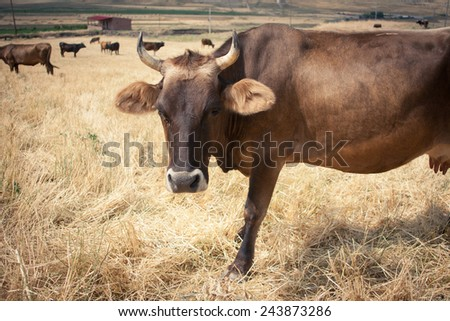 Cow standing in a meadow - stock photo