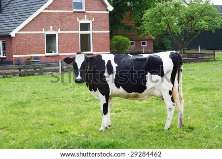 Cow standing in a meadow in front of a part of a farm.