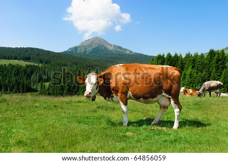 Cow with the background of mountains and clouds in the sky Italy, Trentino Alto Adige - stock photo