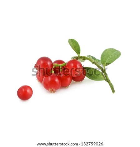 Cowberries isolated on white background - stock photo