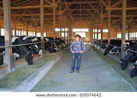 Cowboy and Cows, Farming - stock photo