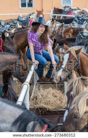 cowboy lady feeding horses in stable closeup - stock photo