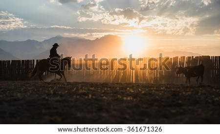 Cowboy Roping Cattle at Sunrise - stock photo