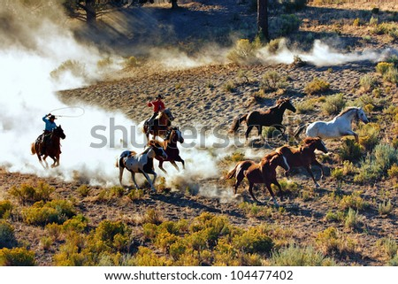 Cowboys  and Cowgirl chasing wilding horses. roping and riding, with dust flying everywhere