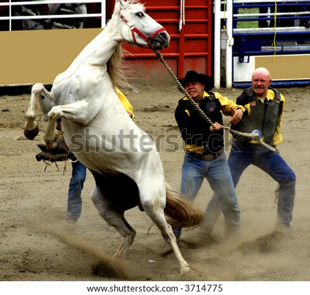 cowboys competing in a wild horse race - stock photo