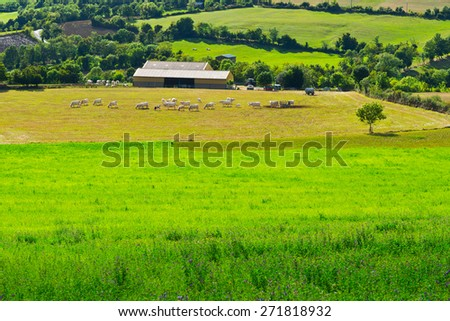 Cows and Bulls Grazing on Alpine Meadows in France - stock photo