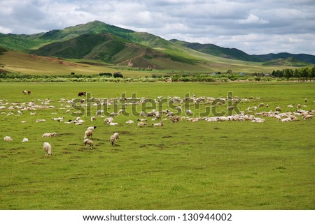 cows and sheep in Inner Mongolia