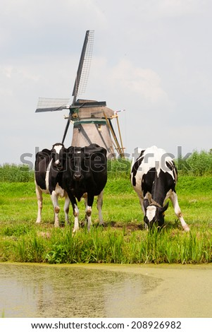 Cows and windmill  - stock photo