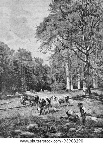 "Cows graze in the forest glade. Engraving by Kozeberg from picture by painter Shtryuttsel. Published in magazine ""Niva"", publishing house A.F. Marx, St. Petersburg, Russia, 1893"